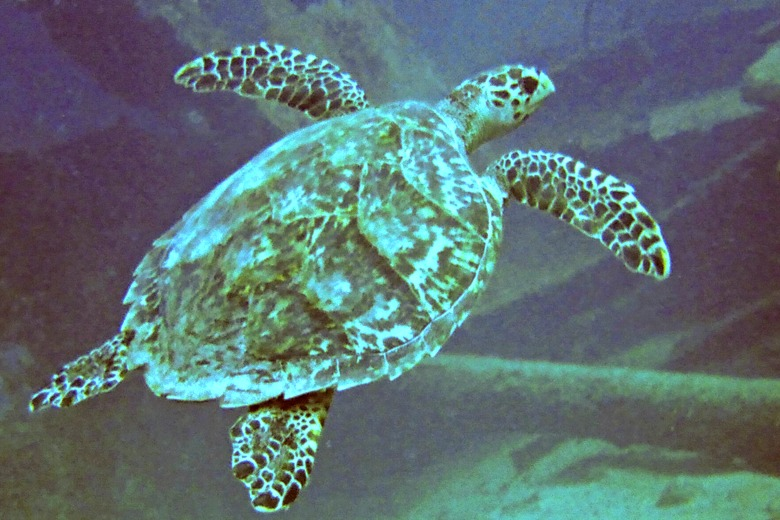 Sea turtle! Photo Credit