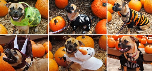 Disney Halloween Pet Costumes Disneyexaminer