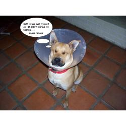 Small Crop Of Cone Of Shame