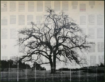Mike Saijo - Oak Tree