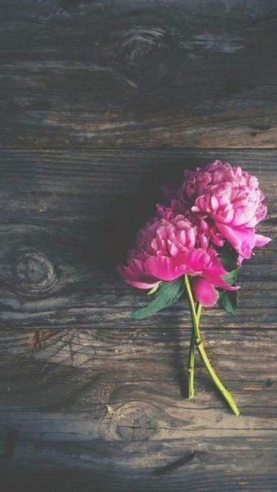 花 | おしゃれなスマホ壁紙 | スマホ壁紙/iPhone待受画像ギャラリー
