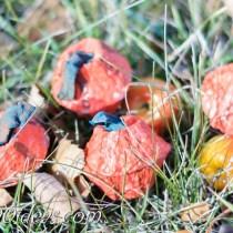 egg-carton-pumpkin-craft-14