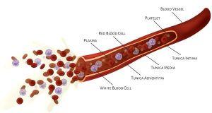 varicose-veins-vs-blood-clots