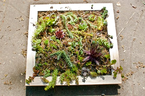DIY Vertical Succulent Garden Tutorial