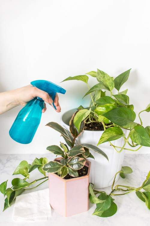 Learn how to get your plants ready for the growing season with some spring cleaning tips.