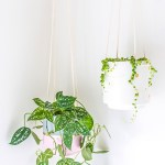 DIY Hanging Planter Upgrade