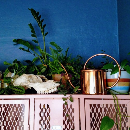 skull + plants