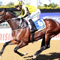 Khaya Stables' Last Winter Stars