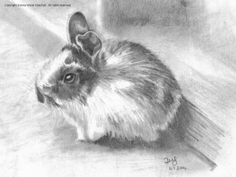 Spotted Baby rabbit, A5 pencil & graphite stick