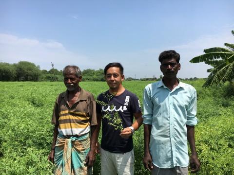 インディゴ栽培