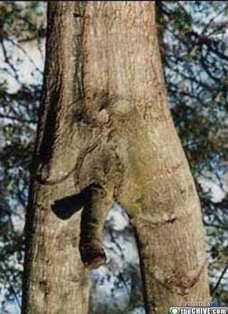 strom připomínající penis