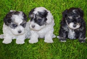 3_pups