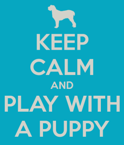 keep-calm-and-play-with-a-puppy