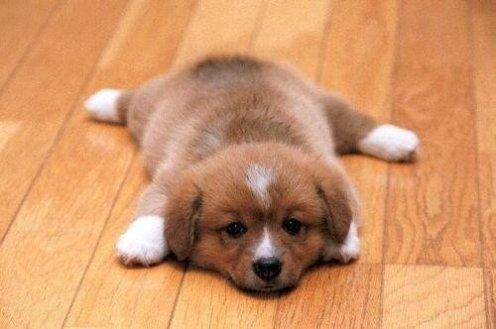 sad-rug-puppy