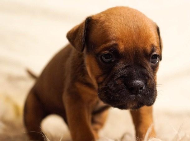 sad dog missing human