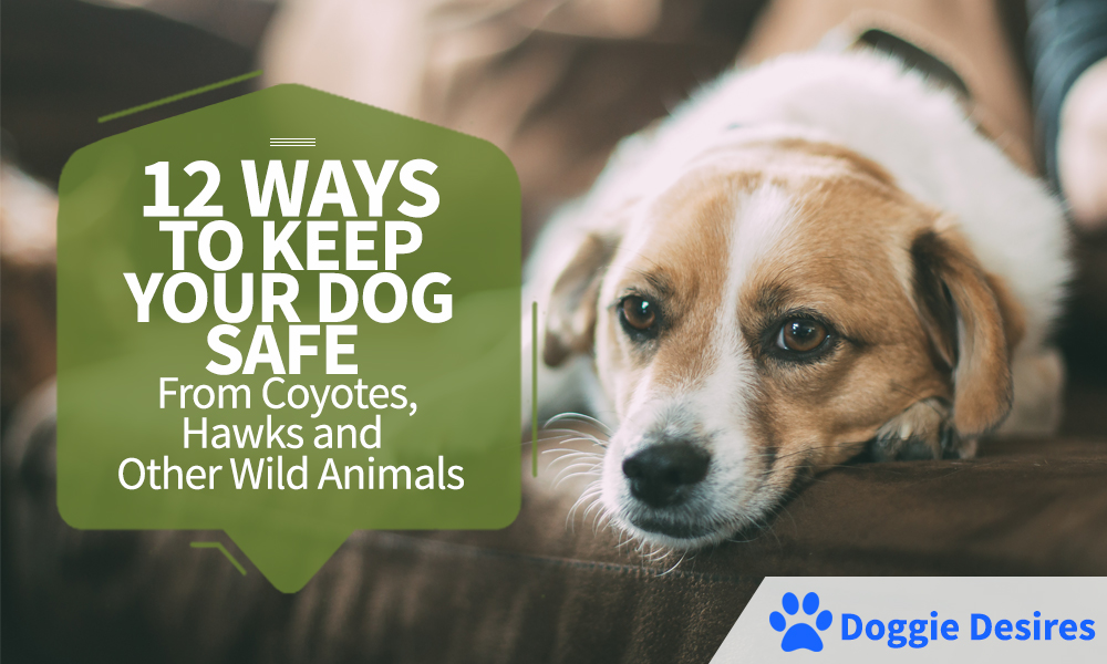 12 Ways To Keep Your Dog Safe From Wild Animals