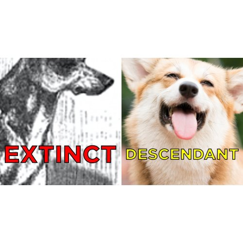 Medium Crop Of Extinct Dog Breeds