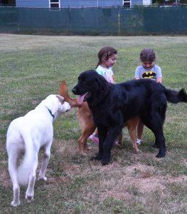 Rescue Dog Life
