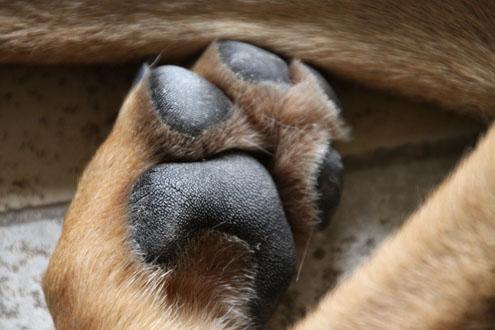 zahnprobleme beim hund erkennen