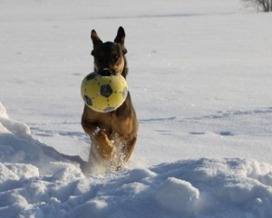 Cleo Schnee Ball