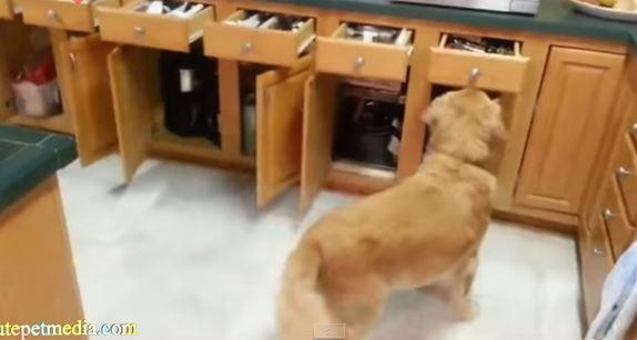 Dog Video 1