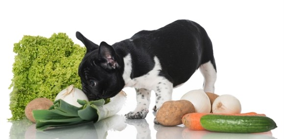 Dogs! Stop Begging for Food Dogs! Stop Begging for Food Dogs! Stop Begging for Food puppyfood