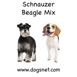 Small Crop Of Beagle Corgi Mix