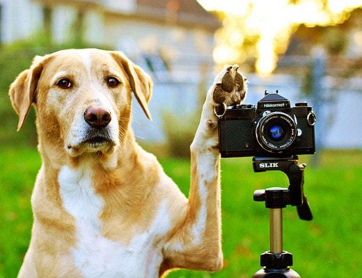 В Шотландии ищут собаку на должность посла