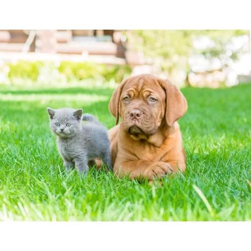 Medium Crop Of Why Does My Dog Eat Cat Poop
