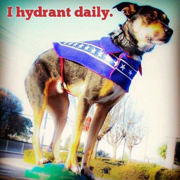I love urban agility! Here Mort is wearing the Daredevil Coat from Stylish Canine