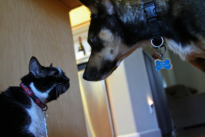 A dog and a cat staring at each other.