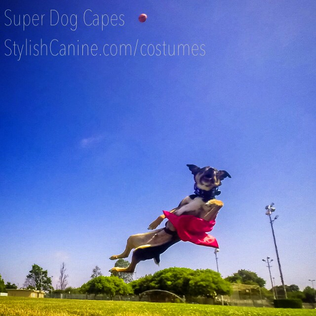 You could win a custom, handmade Super Dog Cape!