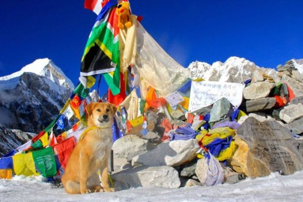 Rupee dog on Mount Everest