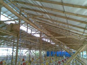Kandang Atap alumunium Foil yang sejuk dan Dingin