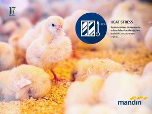 heat stress pada ayam