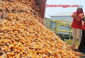 harga jagung langka