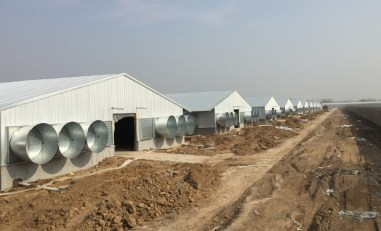 kandang-closed-house-ideal