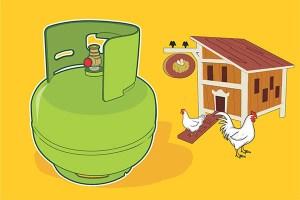 hukum LPG di kandang ayam
