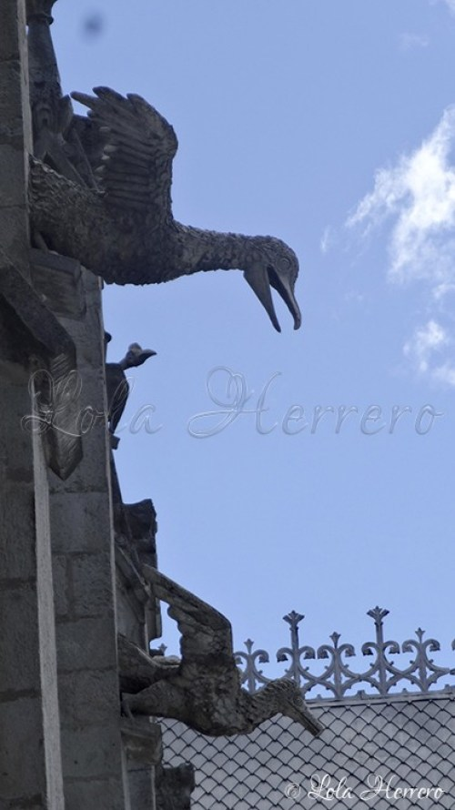 Gárgolas Quito (Ecuador) (254)