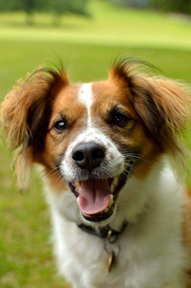 Ringo the dog