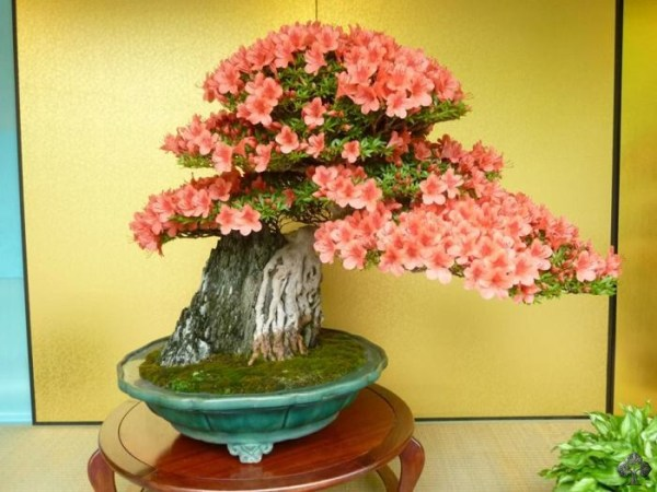 01-flowering-bonsai