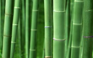 bamboo_hd_wallpaper_1