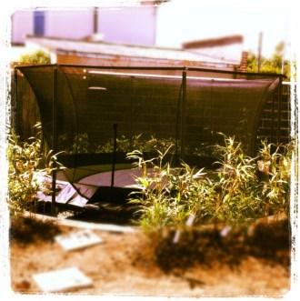 sinking a trampoline