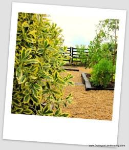 coastal landscaping, dublin (1)