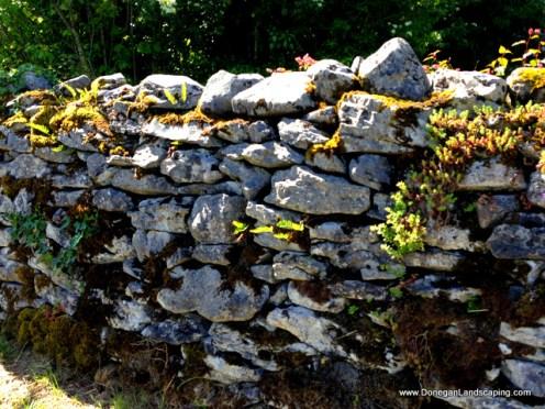caher bridge garden (9)