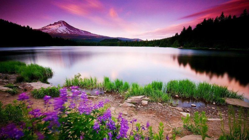 nature backgrounds hd
