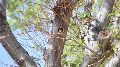 woodpecker-video