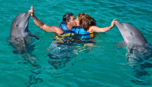 Dolphin Discovery em Cancun