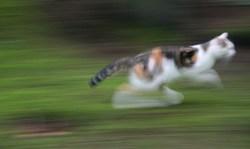 おもしろい猫の画像・写真-さっさかさ~