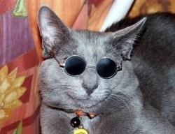 おもしろい猫の画像・写真-探偵業